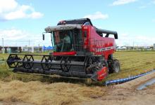 Faltam 35,8 mil hectares para concluir a colheita do arroz no RS