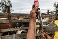 Vacinação contra aftosa termina sexta, dia 31, informa Secretaria da Agricultura