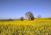 Umidade no solo interrompe plantio das culturas de inverno